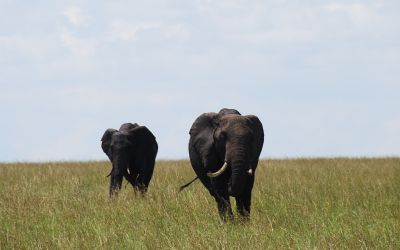 Best safari in the world: Biggest attractions in Kenya