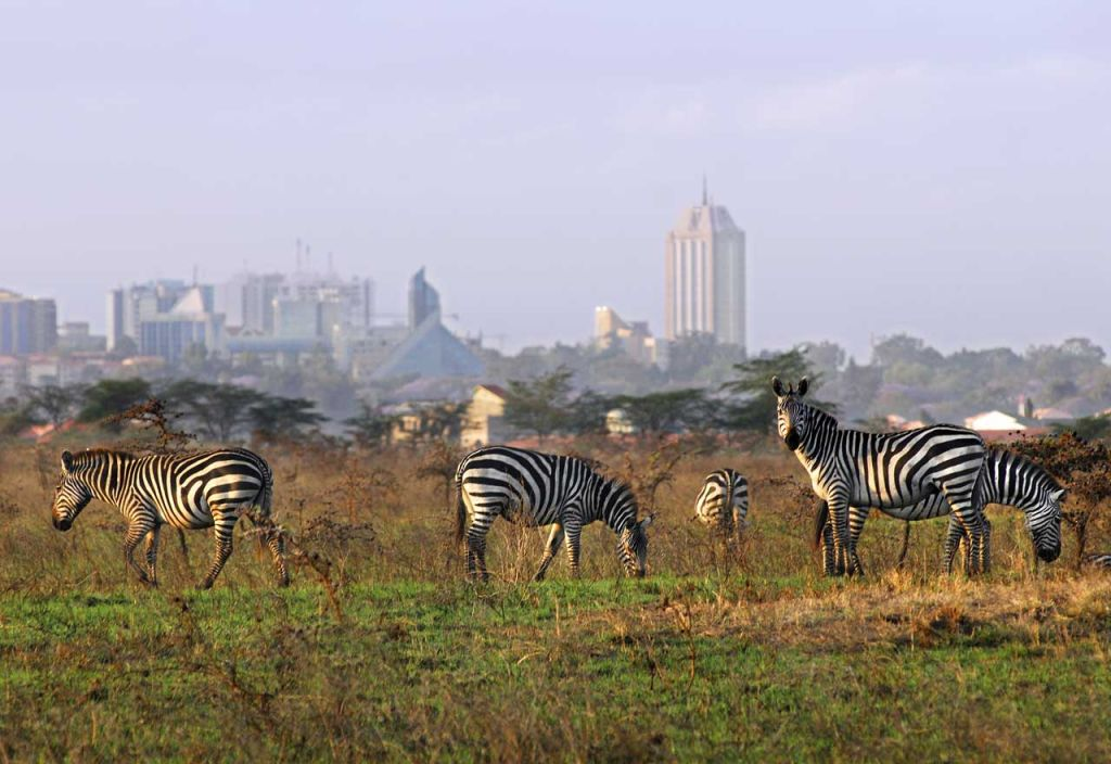 Wildlife close to the city center of Nairobi