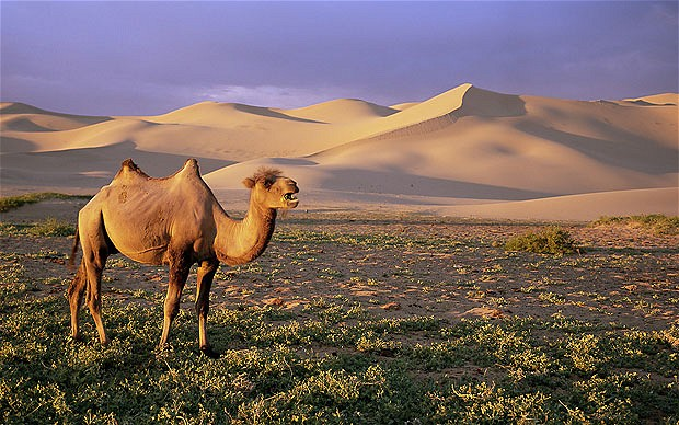Gobi desert is the 5th largest desert in the world
