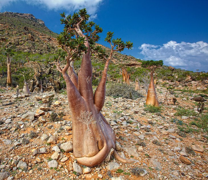 Most Alien Place Socotra