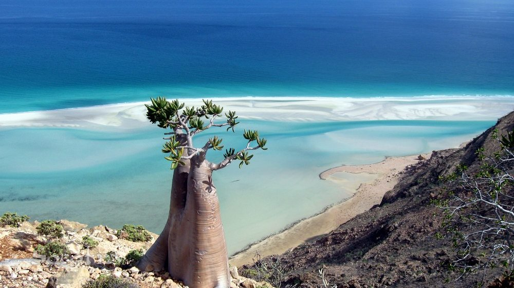 View of coastal environment on Socotra Island