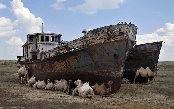 Camels resting around a ship near Aral Sea