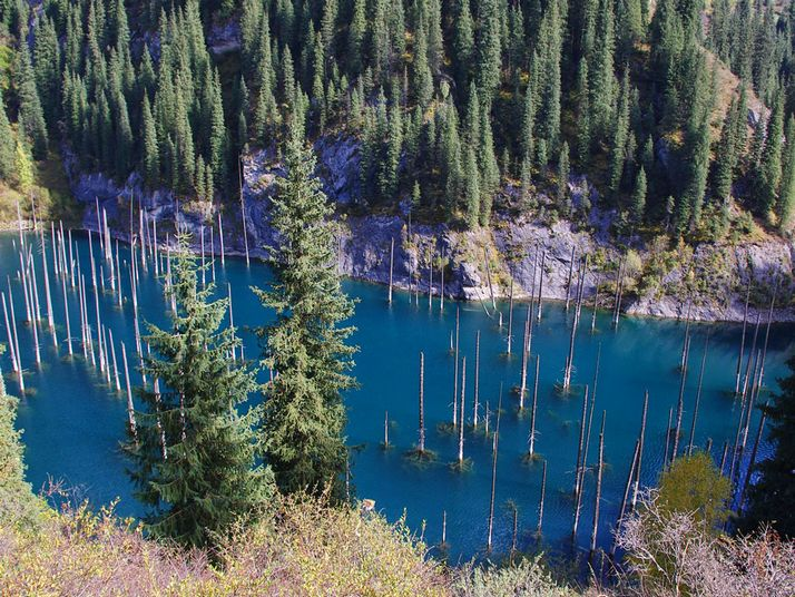 Underwater forest of pine trees in Kaindy Lake in Kazakhstan