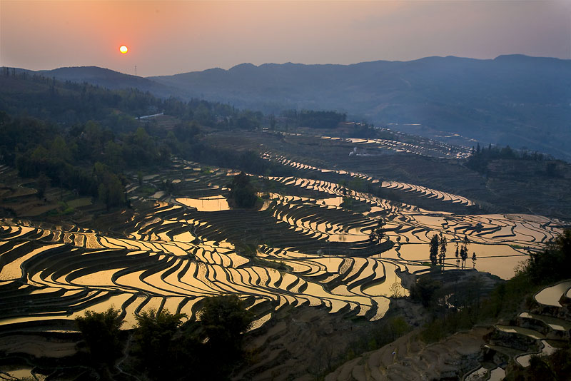 Rice Field Terraces Yunnan China