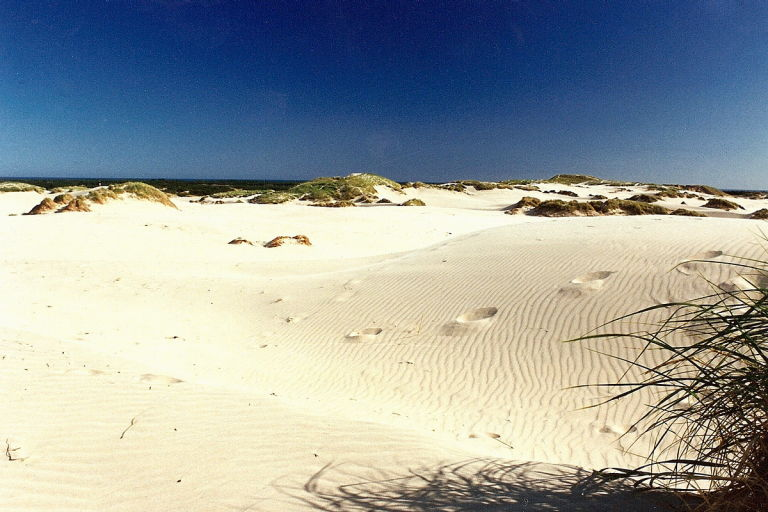 Råbjerg is the largest sand dune in Denmark