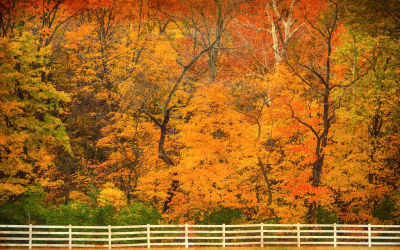 Indian Summer: North American Weather phenomenon