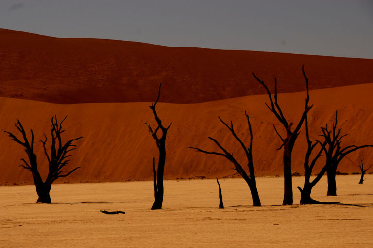 Images of dead trees in Naukluft Park, Namibia