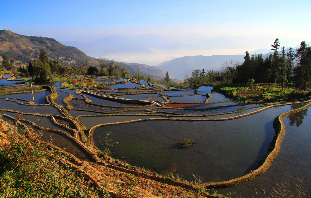 Yunnan rice fields