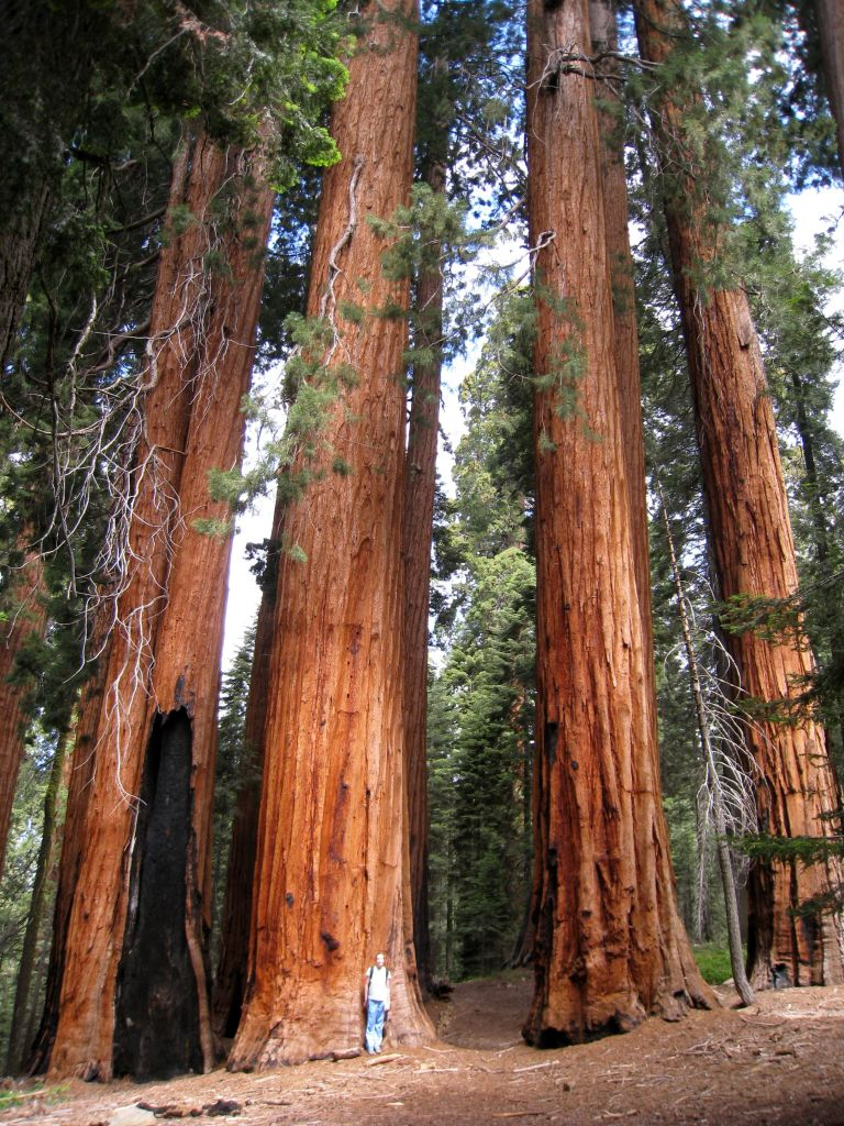 Redwood National and States Park is a huge protected area in California