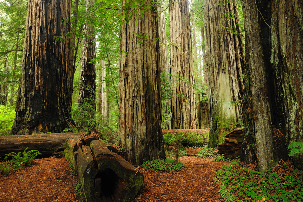 Redwood National Park is an UNESCO World Heritage Site