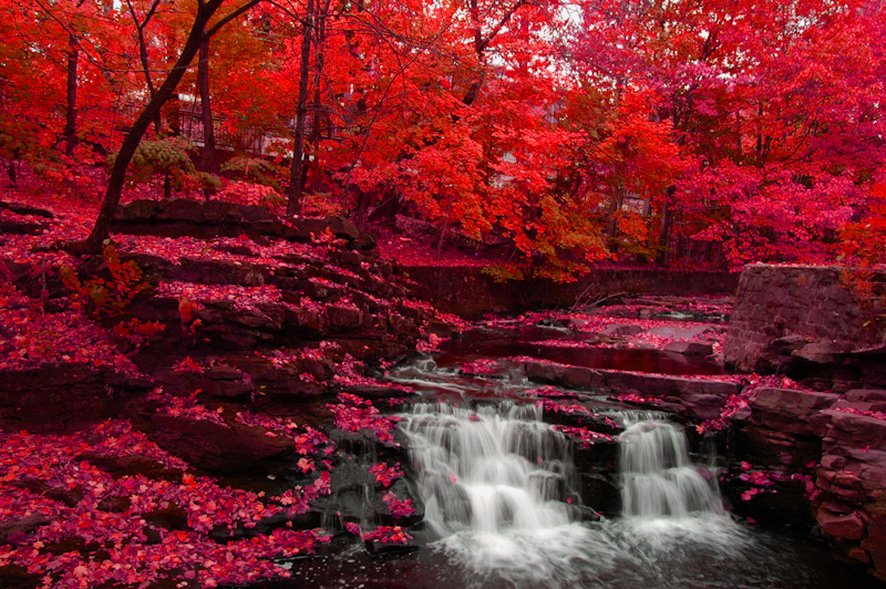 Red Fall autumn